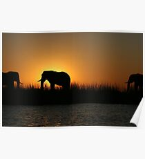 Ahh Africa- Chobe National Park Poster