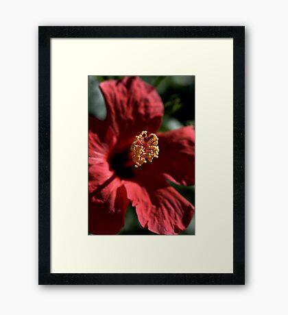 Hibiscus in Bloom Framed Print