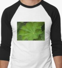 Dew Drops On Lady's Mantel Leaf  Men's Baseball ¾ T-Shirt