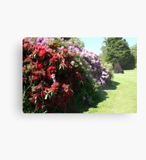 Illustrated Rhododendrons Metal Print