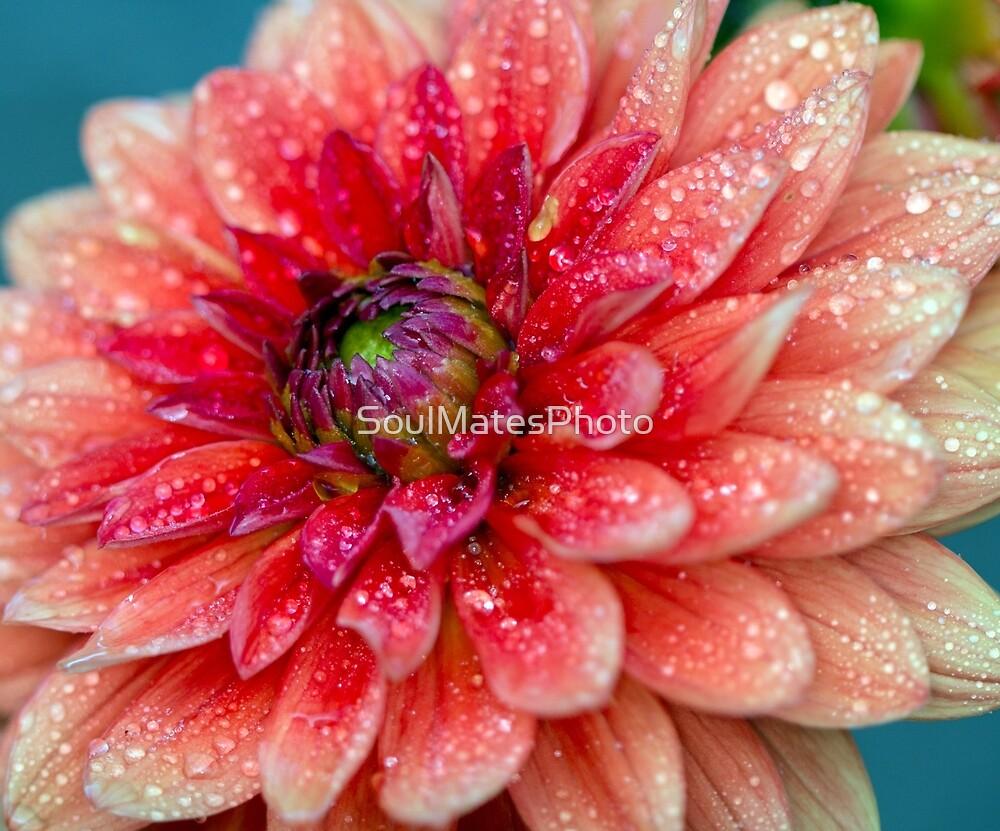 Pink Flower by SoulMatesPhoto