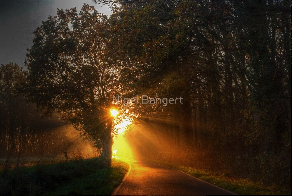 Shafts of Sunlight by Nigel Bangert