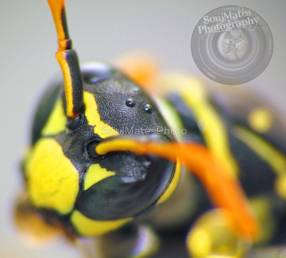 Wasp by SoulMatesPhoto