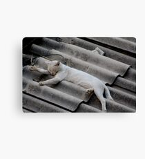 Relaxing in the summer, Beirut. Canvas Print
