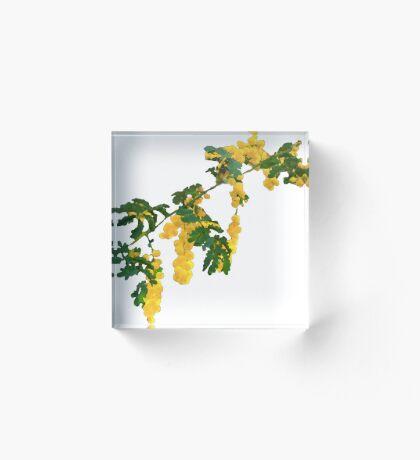 Wattle Fever - White Acrylic Block