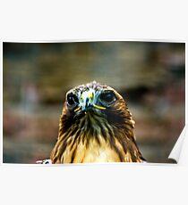Hawk #2 Poster