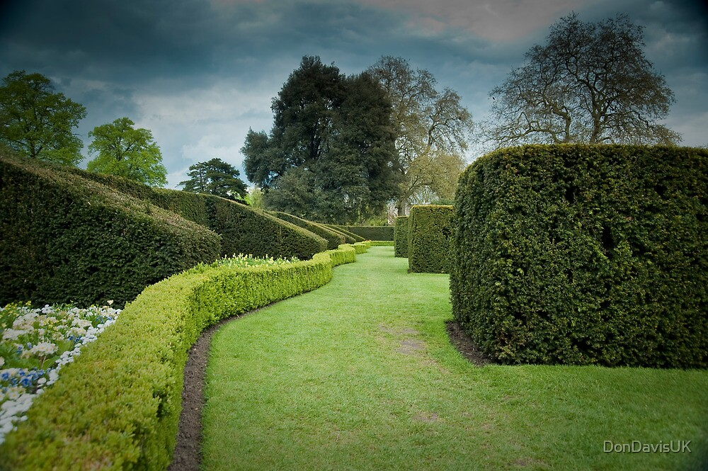 The Long and Winding Hedge:-) by DonDavisUK