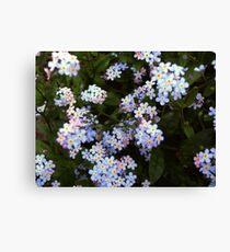 Little blossoms Canvas Print