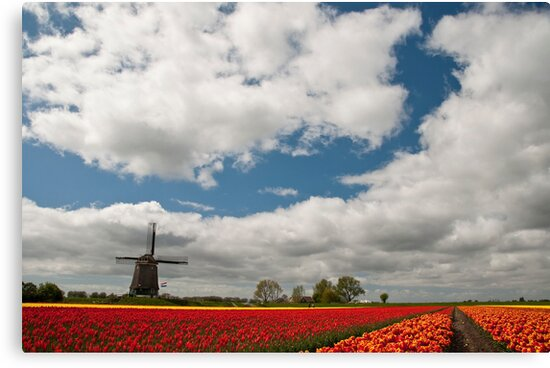 Dutch Roots by Brendan Schoon