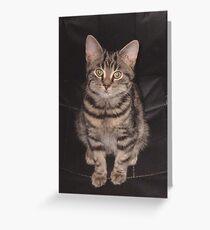 Diesel-Top cat Greeting Card