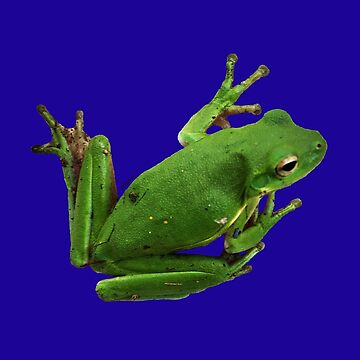 Tree Frog Green a by ATJones