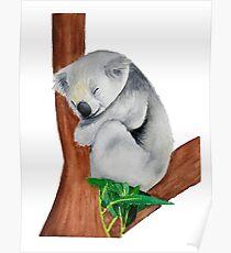 Koala im Baum schlafen Poster