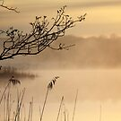 Misty Morning by Donna-R