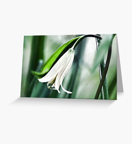 Wild Oats -- (Sessile Bellwort) Greeting Card