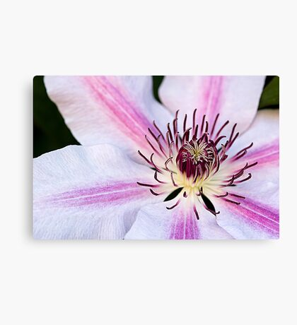 Nelly Moser Canvas Print