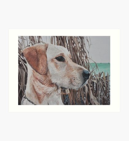 Bailey Art Print