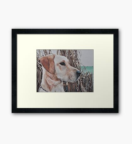Bailey Framed Print
