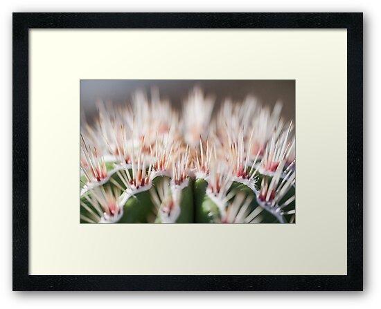 Macro Cactus by ocrutchfield