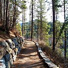 Forest Path by rocamiadesign