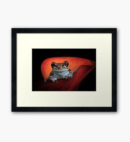 Cute milk frog Framed Print