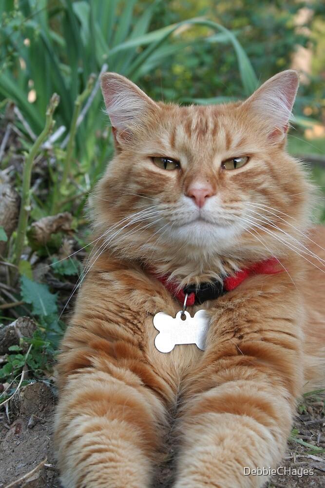 Opie My Orange Tabby Cat by DebbieCHayes