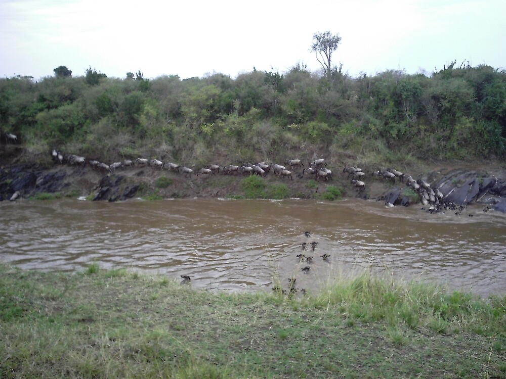 Wildebeest crossing the Mara River by pixiealice