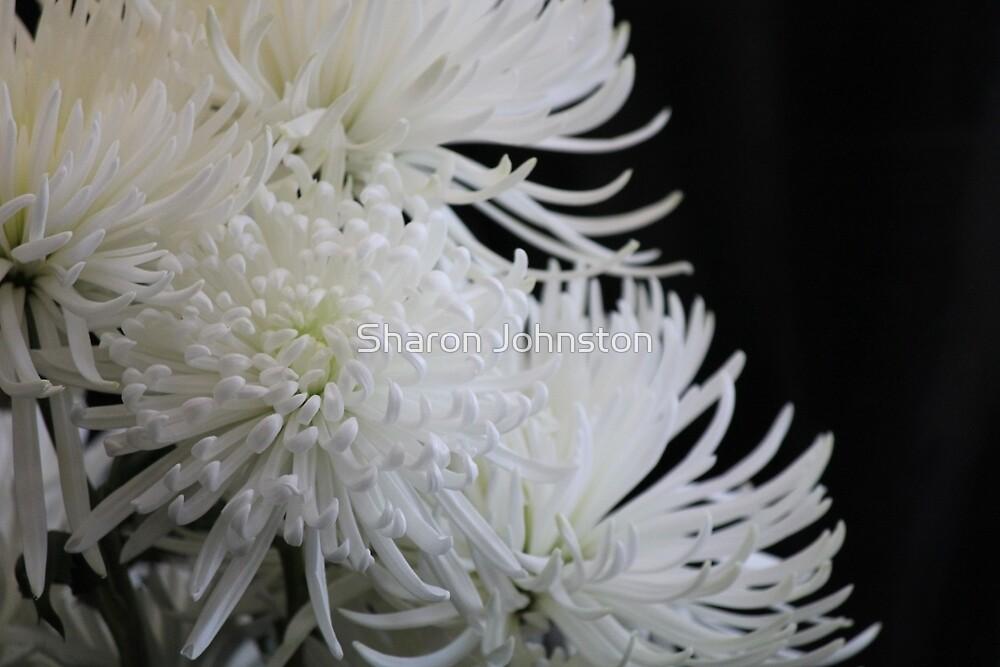 White Spider Mum by Sharon Johnston