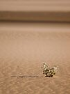 In a sea of sand by Explorations Africa Dan MacKenzie
