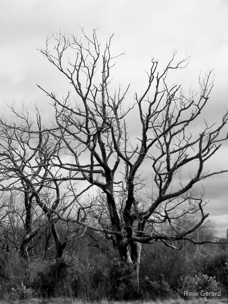 Burnt Trees by arkadyrose