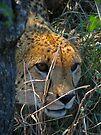 Leery by Explorations Africa Dan MacKenzie