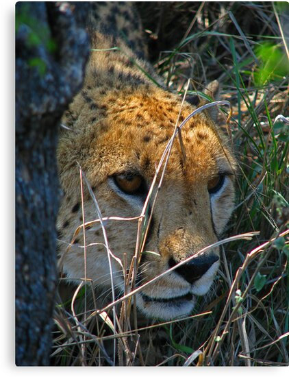Leery by Explorations Africa Dan MacKenzie