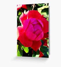 fuschia knockout Greeting Card