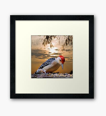 Under the Sunset Framed Print