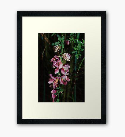 Backyard Blooms Framed Print