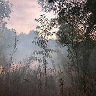 foggy lake by MariannaPhotos
