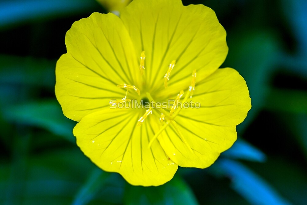 Yellow Flower by SoulMatesPhoto