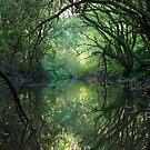 Real life fantasy land. by Heidi Schwandt Garner