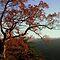 TREE Challenge - Rural Setting