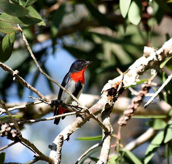 A Small Flowerpecker by byronbackyard