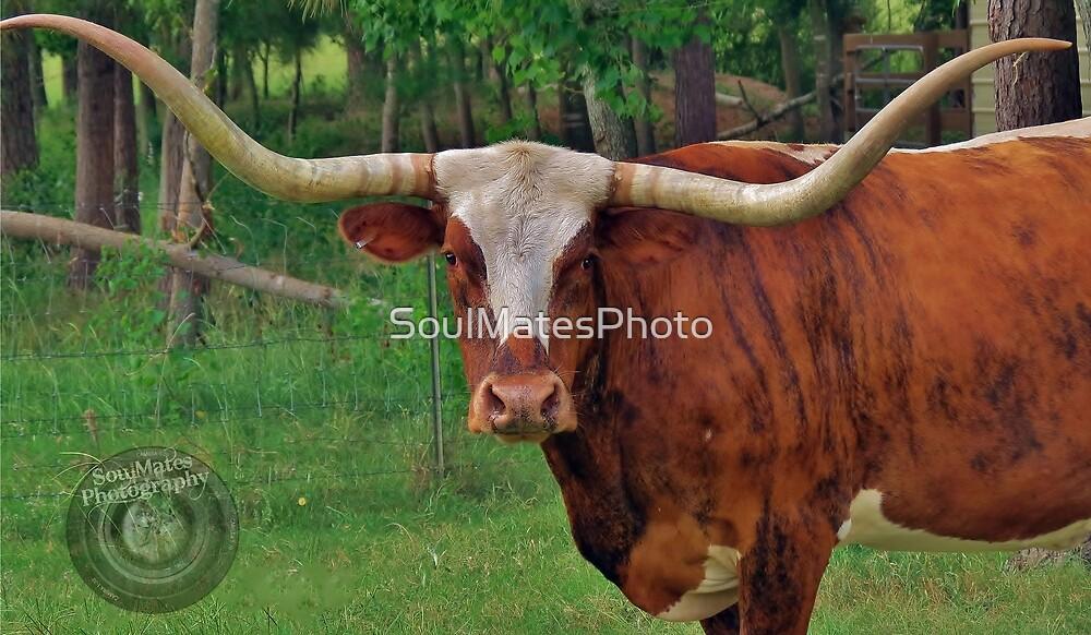 Long Horn by SoulMatesPhoto