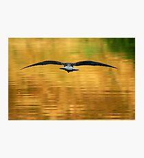 Full Flight Photographic Print