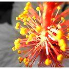 Fireworks By Day by Gozza
