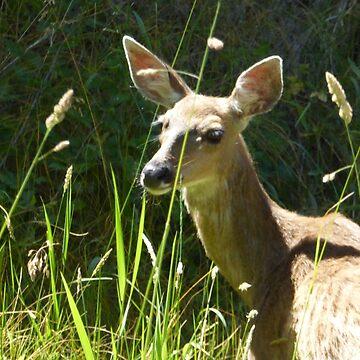 Serene doe by pixiealice