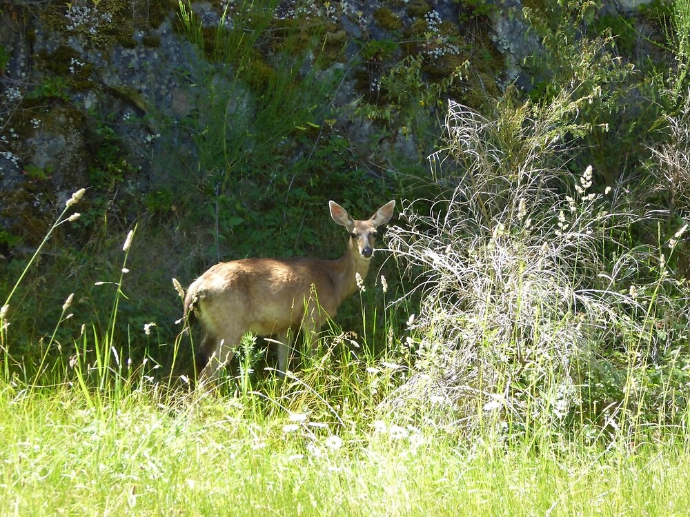 Pretty doe in the grass by pixiealice