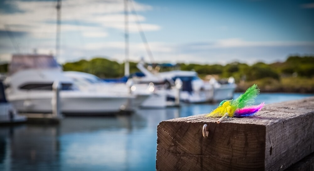 Queenscliff Harbour Mardi Gras by Neil Robinson