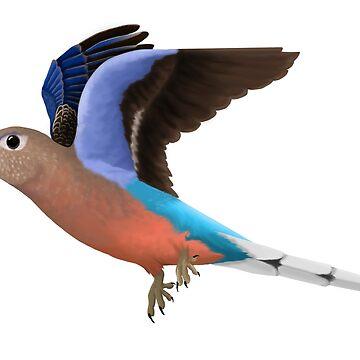 Birding and Wildlife: Bourkes Parrot by BirdHard