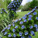 blue bells by squillye3