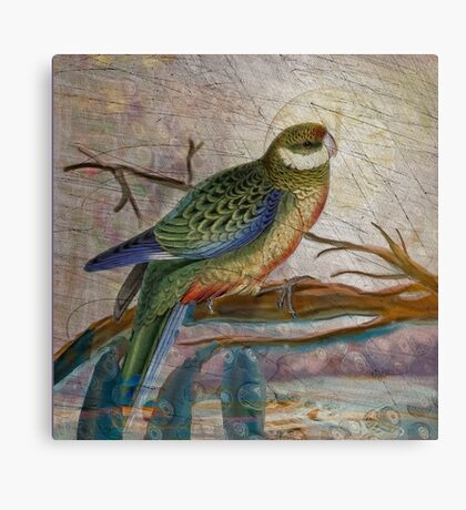 The Stanley Parakeet: inspired by Edward Lear's botanical bird drawing Canvas Print