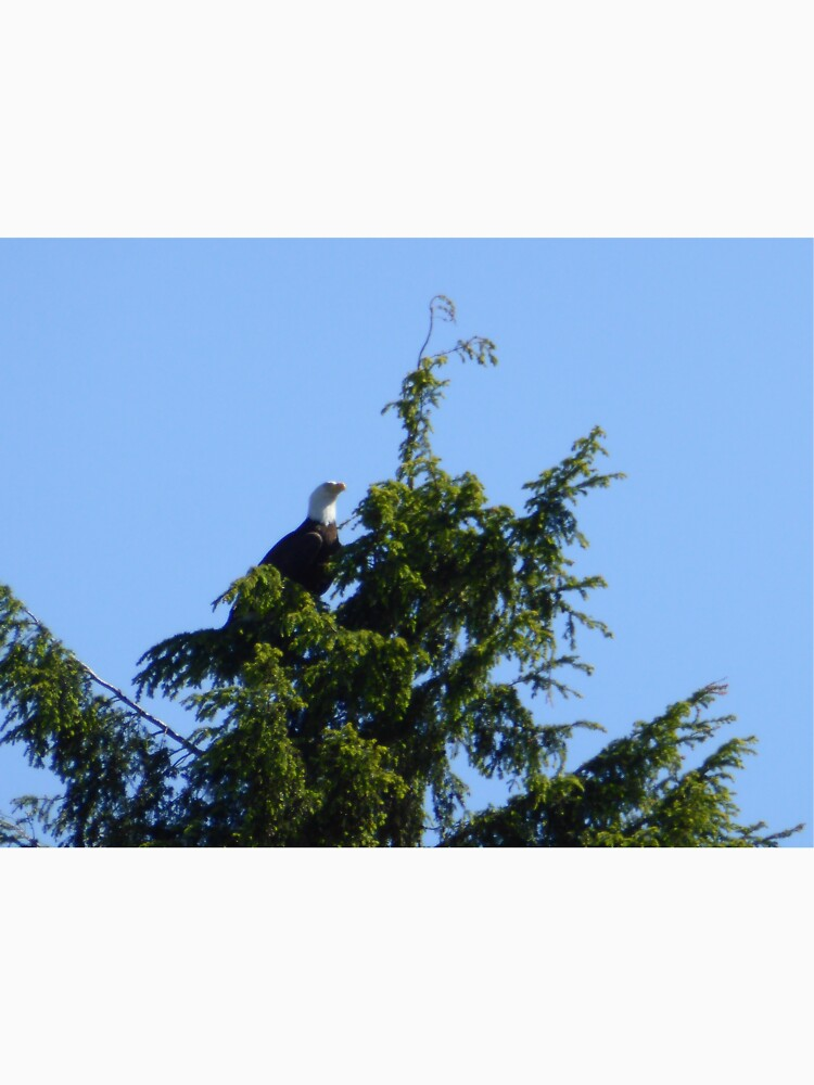 Majestic bald eagle by pixiealice