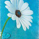 Peek-a-Blue 2 by Leslie Nicole